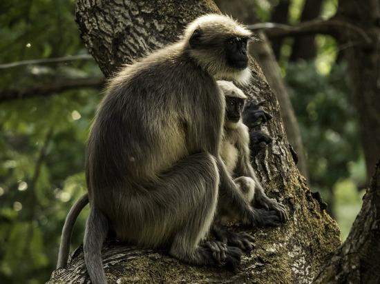Шестеро мужчин заживо съели обезьяну и попали в тюрьму