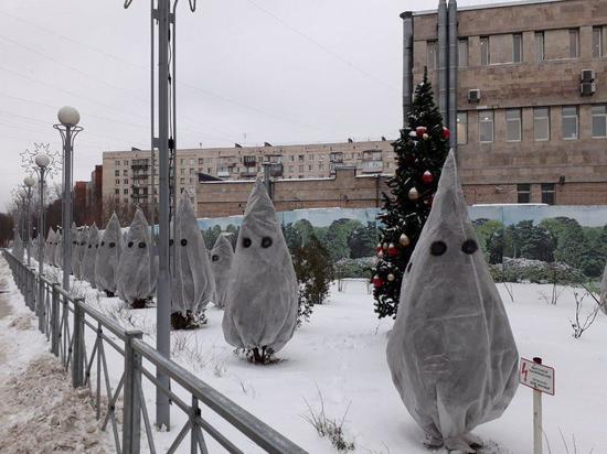 «Страшные елки» в Петербурге напугали жителей города