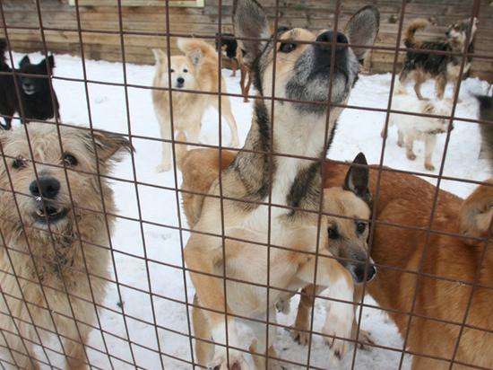 Волонтер рассказал, как помочь бездомным животным пережить зиму