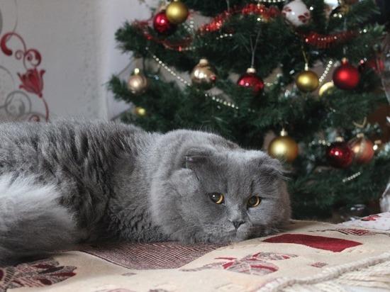 Эксперты рассказали, чем Новый год угрожает домашним животным