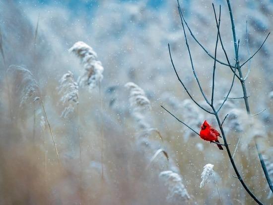 На Рождество Центральную Россию ждут морозы до минус 20 градусов