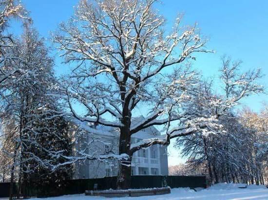 Выбрано главное дерево России — это дуб из усадьбы «Абрамцево»