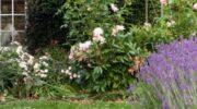 Как купить лучшую беседку для своего сада