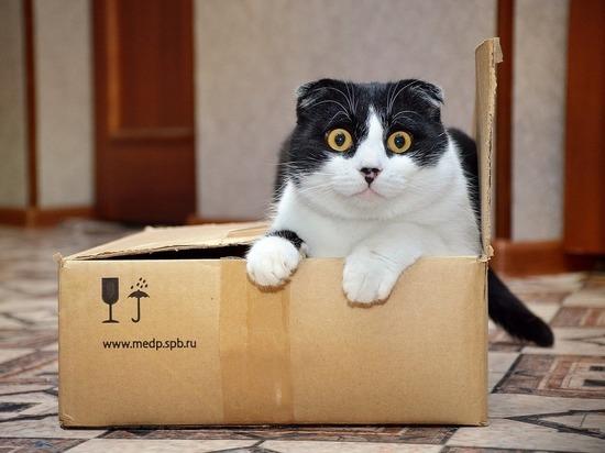 Жительница Канады нечаянно отправила кота по почте